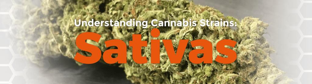 Understanding Cannabis Strains: Sativas