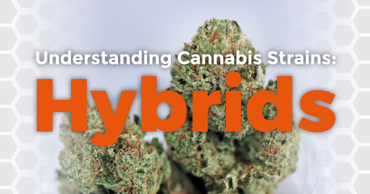 Understanding Cannabis Strains: Hybrids