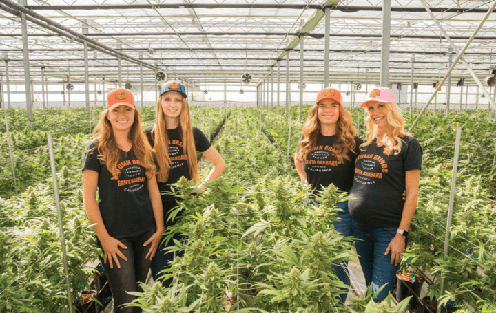 Vie Magazine – Women in Weed – How Females are shaping the cannabis industry