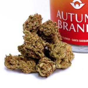 Orang Crush Cannabis Strain